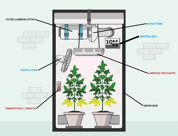 grow box completa